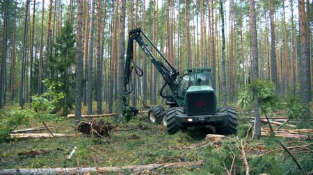 mechanically : Felled pine is getting mechanically sawn. Deforestation, forest cutting concept.