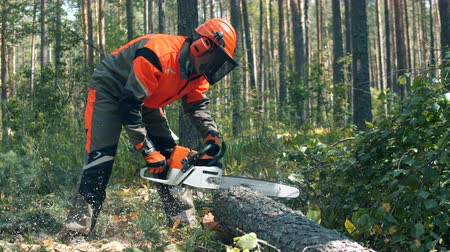 лесозаготовки : Woodman is chopping a tree with a chainsaw. Deforestation, forest cutting concept.
