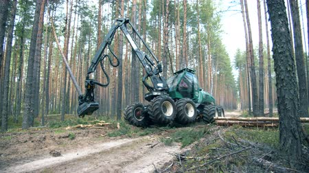 felling : Deforestation, forest cutting concept. Pine forest with the trees getting chopped by the machine