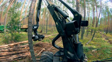 mechanically : Pine trunks are getting mechanically processed and chopped. Deforestation concept.