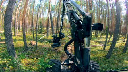 cutting open : Deforestation, forest cutting concept. Wood harvester is working in the forest