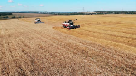 трактор : Two combiners plow wheat on a field. Aerial view.