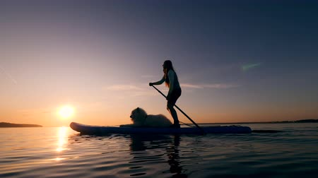 sucção : A woman uses paddle while supping with a white dog. Stock Footage