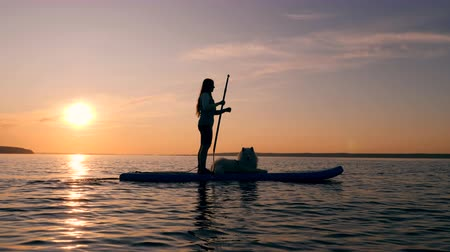 sup : Woman paddleboarding with her dog. Stock Footage