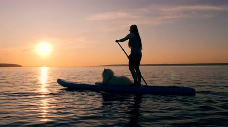 sucção : One girl goes supping with a dog on a sunset background. Stock Footage