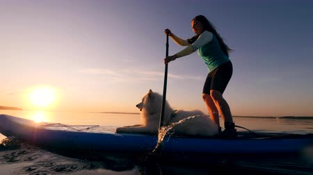 sucção : White dog and a woman on a surfboard. Stock Footage