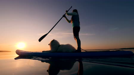 доска для серфинга : Girl goes paddleboarding with white dog.