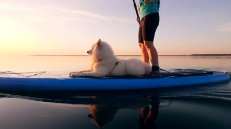sucção : A dog lying on a sup board while a woman uses paddle.