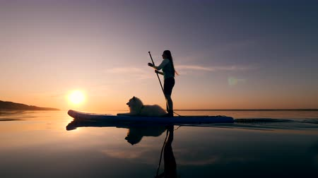 sucção : Sports girl and her dog paddleboarding on a sunset background. Stock Footage
