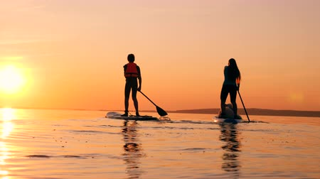 sucção : People paddleboarding together on a sunset background. Stock Footage