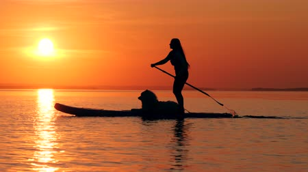 sucção : Woman paddleboards with a dog on sunset background.