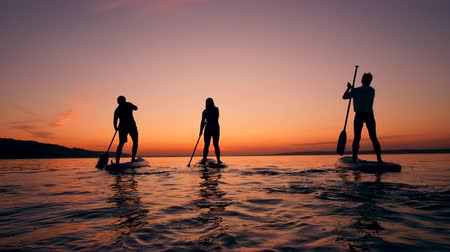 sucção : Sports people paddleboarding on sunset background.