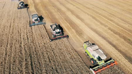 verim : Big combiners working on a field with crops. Aerial view.