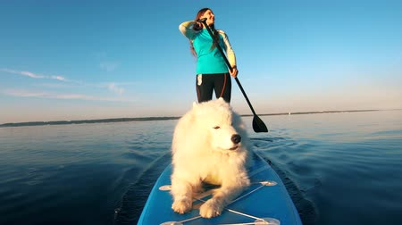 sucção : A dog barking while going on a surfboard with woman. Stock Footage