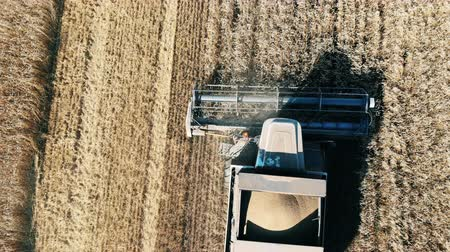 kertészeti : A harvester plows field with crops. Aerial view of modern combine harvesting wheat