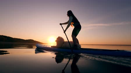 sucção : Female athlete paddleboarding with a dog on a board.