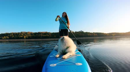 sucção : Young woman supping with white dog on surfboard.