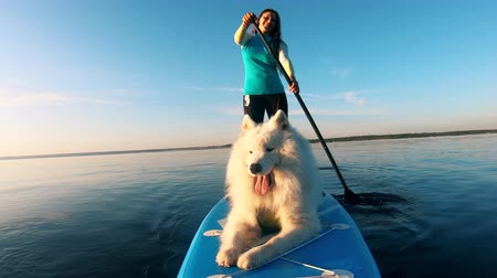 sucção : Girl and white dog supping together on river. Stock Footage