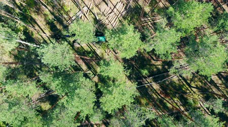 felling : Top view of pines getting chopped by the harvesting truck