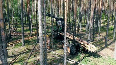 silvicultura : Industrial harvester is loading felled woods. Forest, tree logging, aerial view.