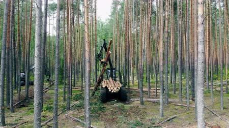 sawn : Sawn trees are getting loaded into the wood harvester Stock Footage