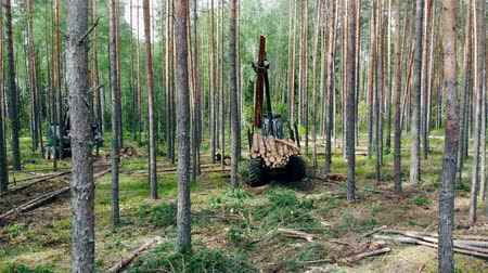 sawn : Deforestation, forest cut concept. Loading process of sawn pines held by the harvesting vehicle
