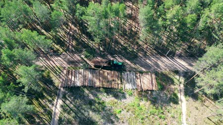 лесозаготовки : Top view of cut woods getting unloaded from the harvester. Deforestation, forest cut concept.