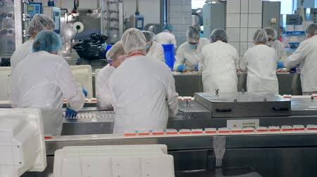 rákok : Processing of fresh crab sticks held by female technicians