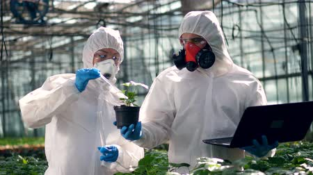 botanikus : Agronomists put chemicals into a pot with plant. Scientist spraying toxic pesticides, insecticides on crop.
