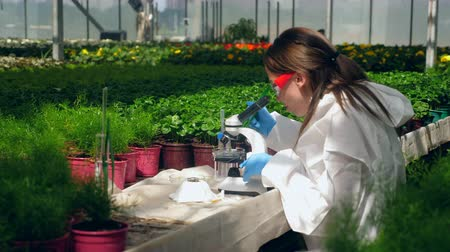 тестирование : One woman checks plants, using microscope in greenhouse. Стоковые видеозаписи