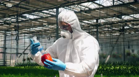 pfefferschote : Agronomist injects liquid to bell pepper in glasshouse. Videos