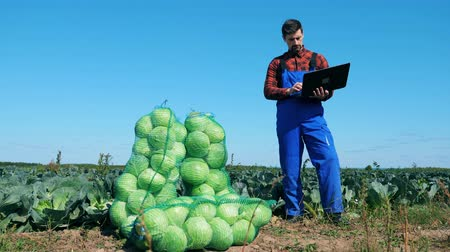biologist : Agrotechnician is standing with a laptop near bags with cabbage