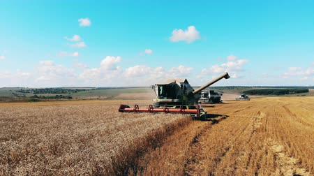 cutting open : Harvesting transport column is riding along the rye field Stock Footage