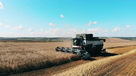 reaping : Reaping of wheat is held by the farming machine Stock Footage