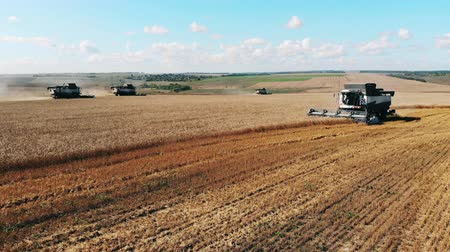 cutting open : Rye field is getting cropped by the agricultural transport