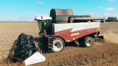 reaping : Agricultural combine is riding and reaping crops