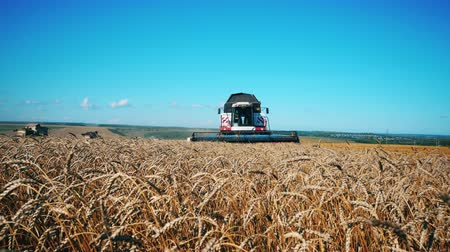 cutting open : Front view of the harvester-thresher riding along the wheat field Stock Footage
