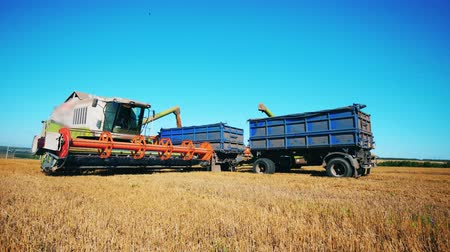 collected : Grain relocation from the combine into the truck