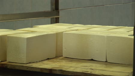 гауда : Plant for the production of cheese. Cheese spread on a table