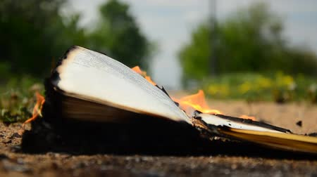 história : Book burning on the ground. The wind leafs through the book page