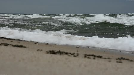 groyne : Big waves on the beach of the Curonian Spit. Storm on the sea. Stock Footage