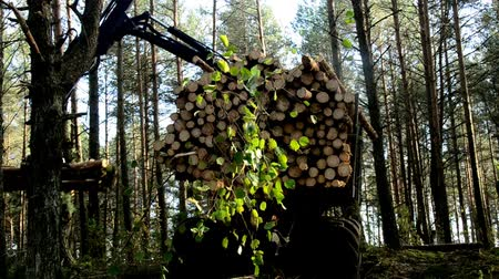 gatherer : gathering loading timber on logging truck. The harvester working in a forest. Stock Footage