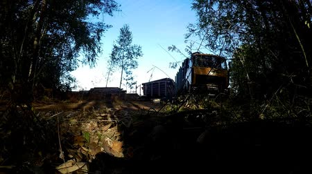 gatherer : gathering loading timber on logging truck. The harvester working in a forest. Transportation of wood in place is difficult passable. Large wheels closeup