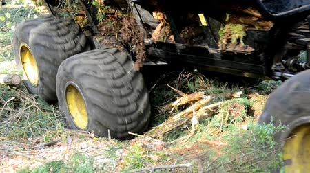 gatherer : Transportation of wood in place is difficult passable. Large wheels closeup. Off-road in bad impenetrable forest