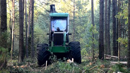 gatherer : Forest Harvester in action - cutting down tree. A specialized Feller Buncher saws a freshly chopped tree trunk.