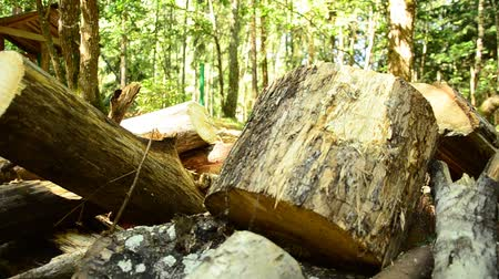 награда : Fallen wood. The destruction of forests. Collapsed trees in the forest.