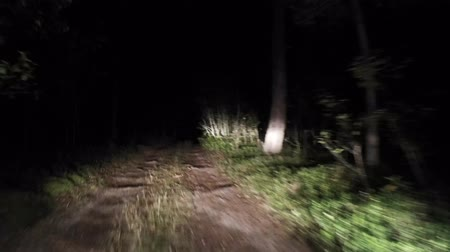 Night forest road Riding at night. Stok Video