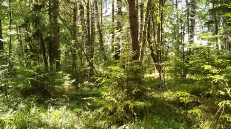 Deciduous forest European forest. Variety of trees.