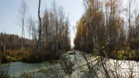 slough : Lungs of the planet. Old European swamps. Swamps of Belarus. Time lapse. Stock Footage