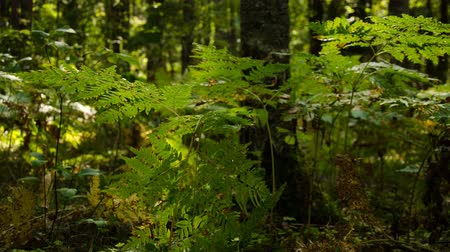 Time lapse. Sunny day in the forest. Mysterious and mysterious forest.